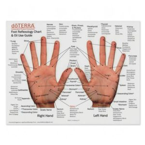 Foot and Hand Reflexology Chart & Oil Use Guide